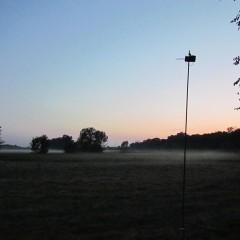 Fledermauserfassung mit Ultraschalldetektoren/batCorder