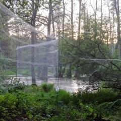 Netzfang von Fledermäusen – Fanganlage am Standort Feuchtgebiet