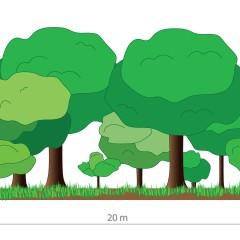 Neuschaffung von Lebensräumen – Prinzipskizze zur Anlage einer strukturreichen Feldhecke