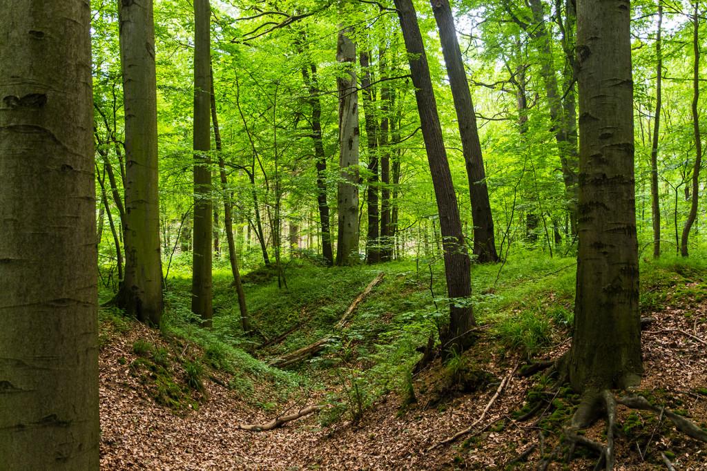 Habitat Bechsteinfledermaus