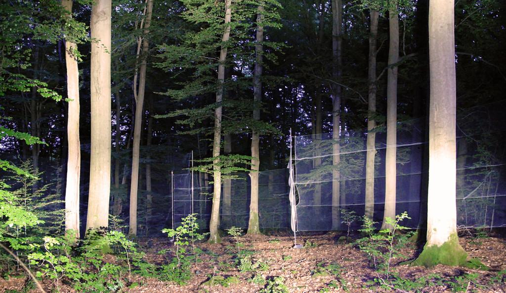 Netzfang_Buchenwald